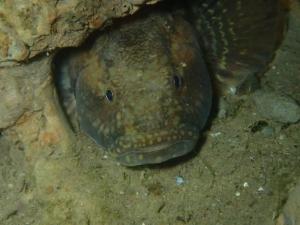 Specialisatie onderwater fotografie en video, basis